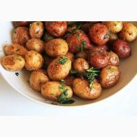 Картофель большим оптом