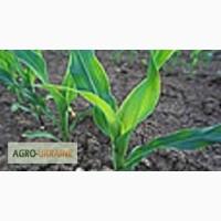 Семена подсолнечника Лимагрейн (Limagrain) посевной материал