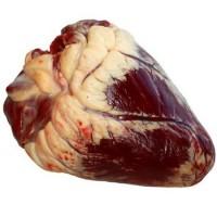 Серце яловиче, сердце говяжее, субпродукти для собак, яловичі