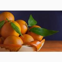 Закупаем апельсины опт