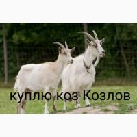 Куплю коз козлов цапов