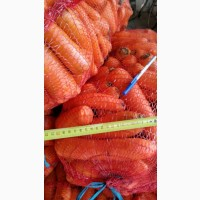 Оптом продам морковь мытую 2 сорт