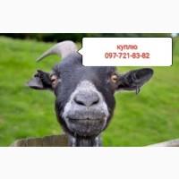 Цапы козы бараны по всей Донецкой области