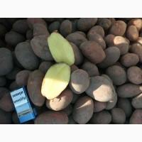 Ф/ГАгро-Україна розпочало реалізацію картоплі вирощеної на власній землі