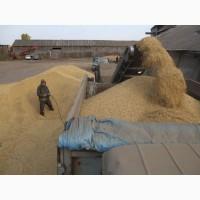 Закупаем пшеницу 2-6 класса. Самовывоз по всей территории Украины