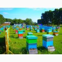 Куплю мед, воск, прополис по высоким ценам в Николаевской области