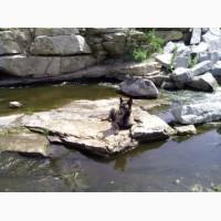 Продам щенков Малинуа (Бельгийская овчарка)