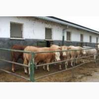 Закупка худоби від домашніх господарств
