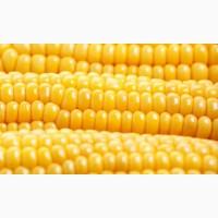 Куплю Вашу кукурудзу