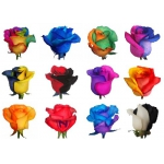 Радужные розы (оптом и в розницу)
