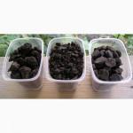 Сорбирующие тяжелые металлы сапропеле-угольные рекультиванты
