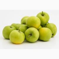 Закупаем яблоко всех сортов на промышленную переработку оптом, ДОРОГО