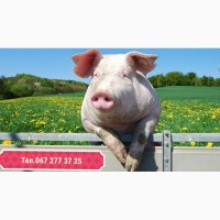 Премікси для свиней. Sano, Lnb, Dolfos, Josera, Polfamix