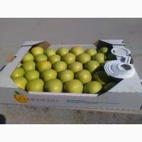 Продам яблуко з холодильника