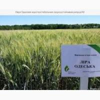 Семена озимой пшеницы Лира Одесская