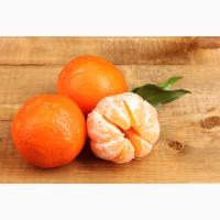 Продам мандарины оптом