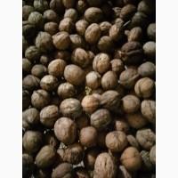 Продам грецькі горіхи нового урожаю