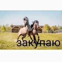 Закупка лошадей коней на убой дорого