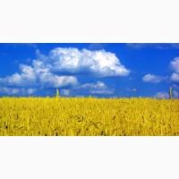 Новый урожай 2021 года. Куплю оптом пшеницу