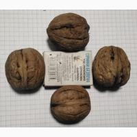 Куплю горіх грецький (волоський) сухий неочищений від 100 кг з дому та по домовленості