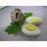 Перепелиные домашние яйца
