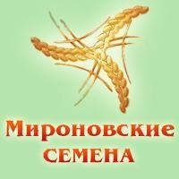 Посівний матеріал озимої пшениці - 1 репродукція., еліта, с./еліта