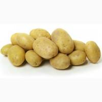 Продажа ривьеры посадка Продам картофель посадочный ривьера