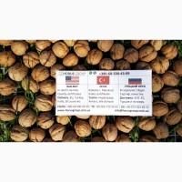 Грецкий орех наивысшего качества в Украине / Walnuts best quality in Ukraine / Ceviz