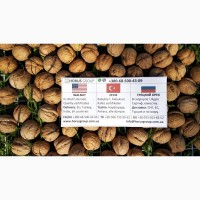 Грецкий орех Экспорт / Walnuts Export / Ceviz teslim