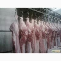 М ясо свинини