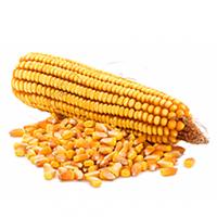 Купую кукурудзу. Постійно