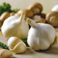 Озимый чеснок Мессидор 60+ TOP Onions