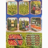 Продаж яблук