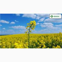 Компанія Гран пропонує насіння озимого ріпаку ПАРКЕР