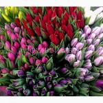 Тюльпаны к 8 марта 2019 из Голландии/тюльпани до 8 березня