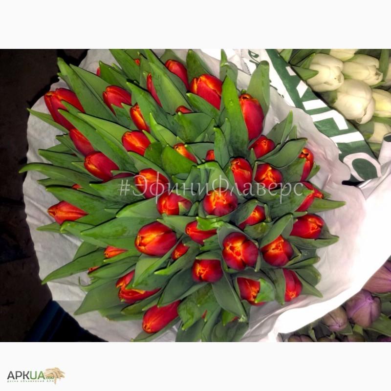 Фото 4. Тюльпаны к 8 марта 2018 из Голландии/тюльпани до 8 березня