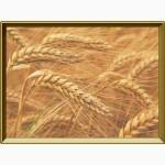 Купим пшеницу.Урожай 2017
