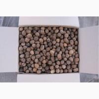 Принимаем заказы на грецкий орех 2018года