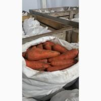 Продам морковку сорт Абако, холодильное хранение, крупный и мелкий опт
