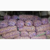 Продам картоплю.Номер у описі