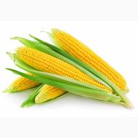 Кукуруза, закупаем дорого