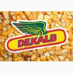 Семена кукурузы Monsanto DK 315