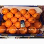 Апельсины оптом (Египет, Турция). Лучшее предложение в Украине. Звоните