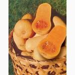 Продам семена Тыква Арабатская