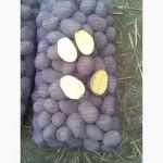 Продам картоплю товарну та середню