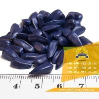 Якісне сертифіковане насіння соняшника Ясон від виробника