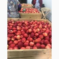 Продам яблоко разных сортов