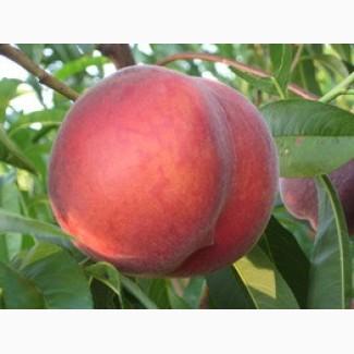 Продам персики с собственных садов