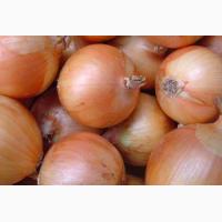 Продам семена лука сорт Халцедон Глобус Штутгартен ризен