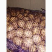 Продам картофель. Сорт Гала. Производство Беларусь